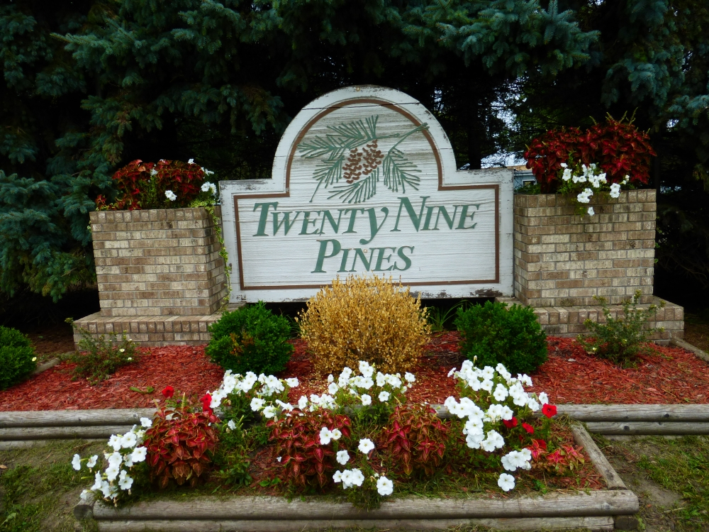Twenty-Nine Pines